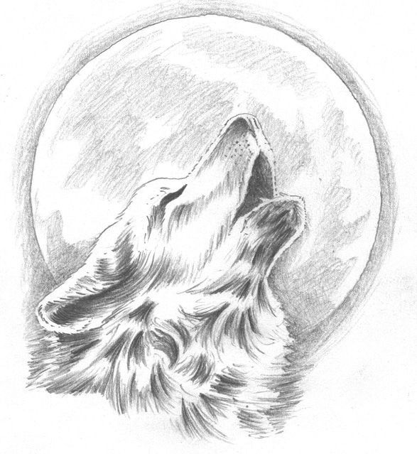 howling wolf with moon background graphite  drawings