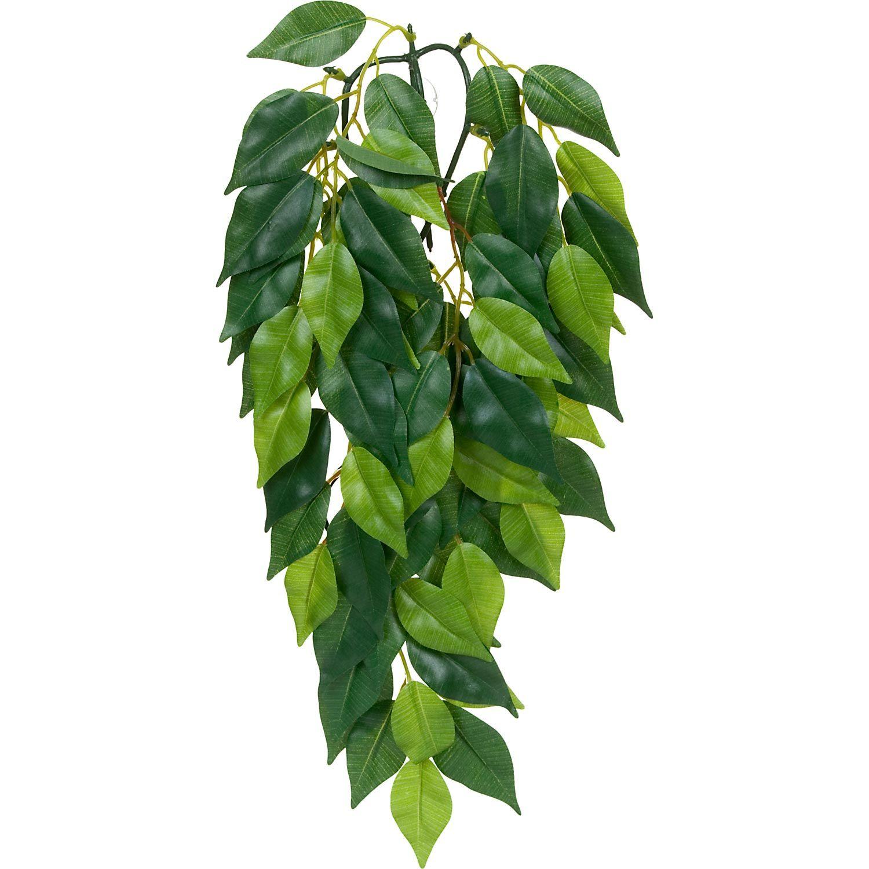 Exo Terra Silk Ficus Jungle Plant Plants Ficus Petco