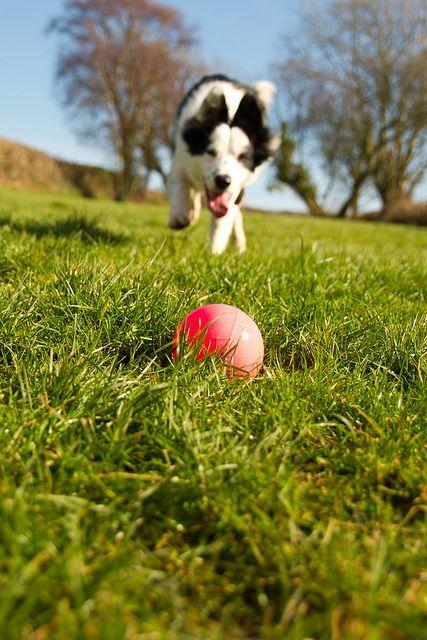 Go Fetch! by Collagen Rock, via Flickr