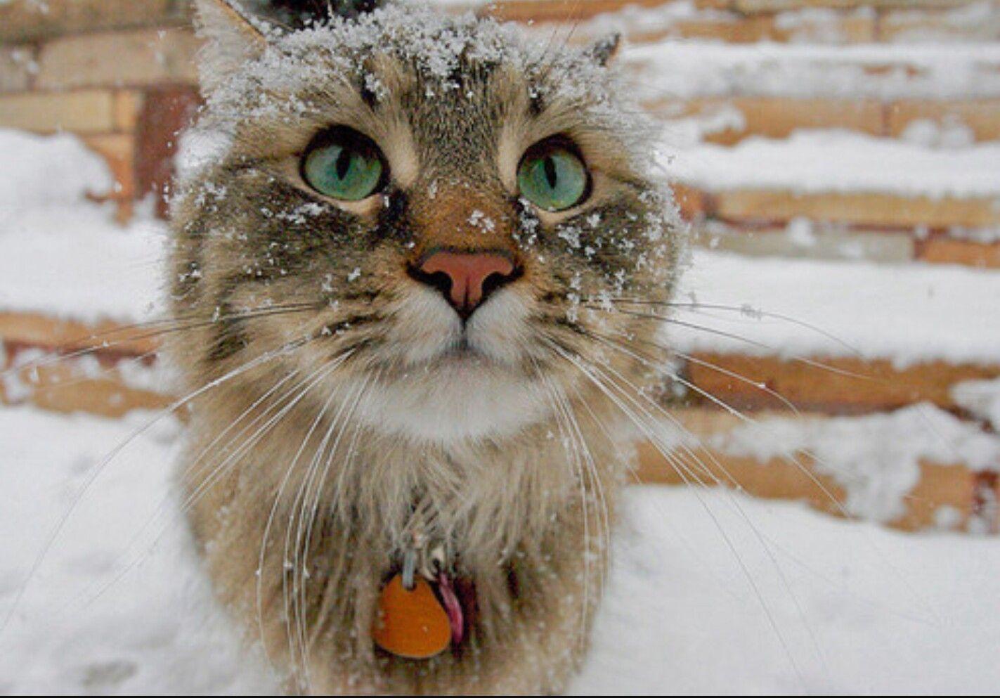 •g00dvibes1• Winter cat, Animals, Cute animals