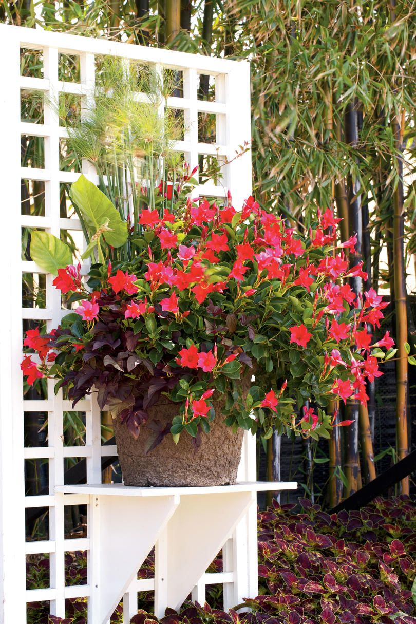 If You Have A Bright Blooming Plant That You Know Does Well In You Garden In Summer Plant It Solo And M Container Plants Container Gardening Garden Containers