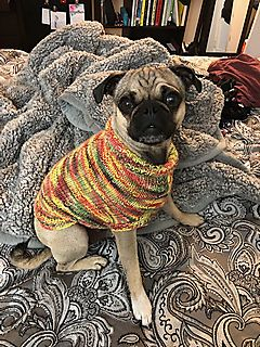 Sock Monkey Dog Sweater pattern by Ronnie Eldridge #sockmoneky