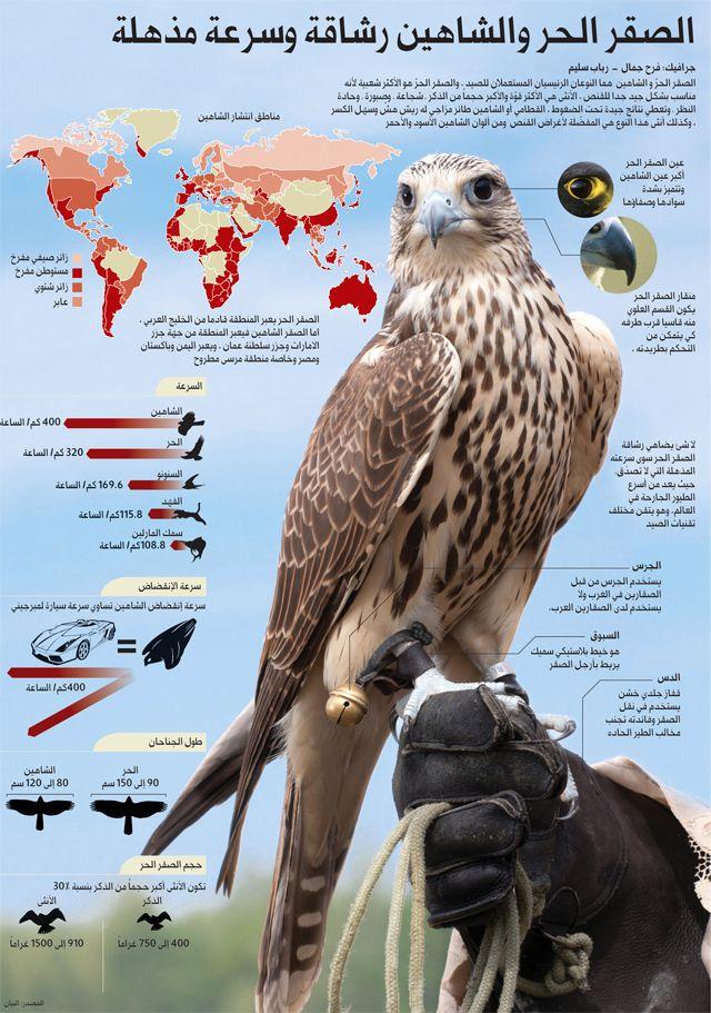 Pin By Maktab مکتب حسین On Espy Birds Of Prey Pet Birds Beautiful Birds