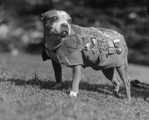 1914-1945:  Sergeant Stubby (1916 or 1917 – March 16, 1926), was the most decorated war dog of World War I and the only dog to be promoted to sergeant through combat.