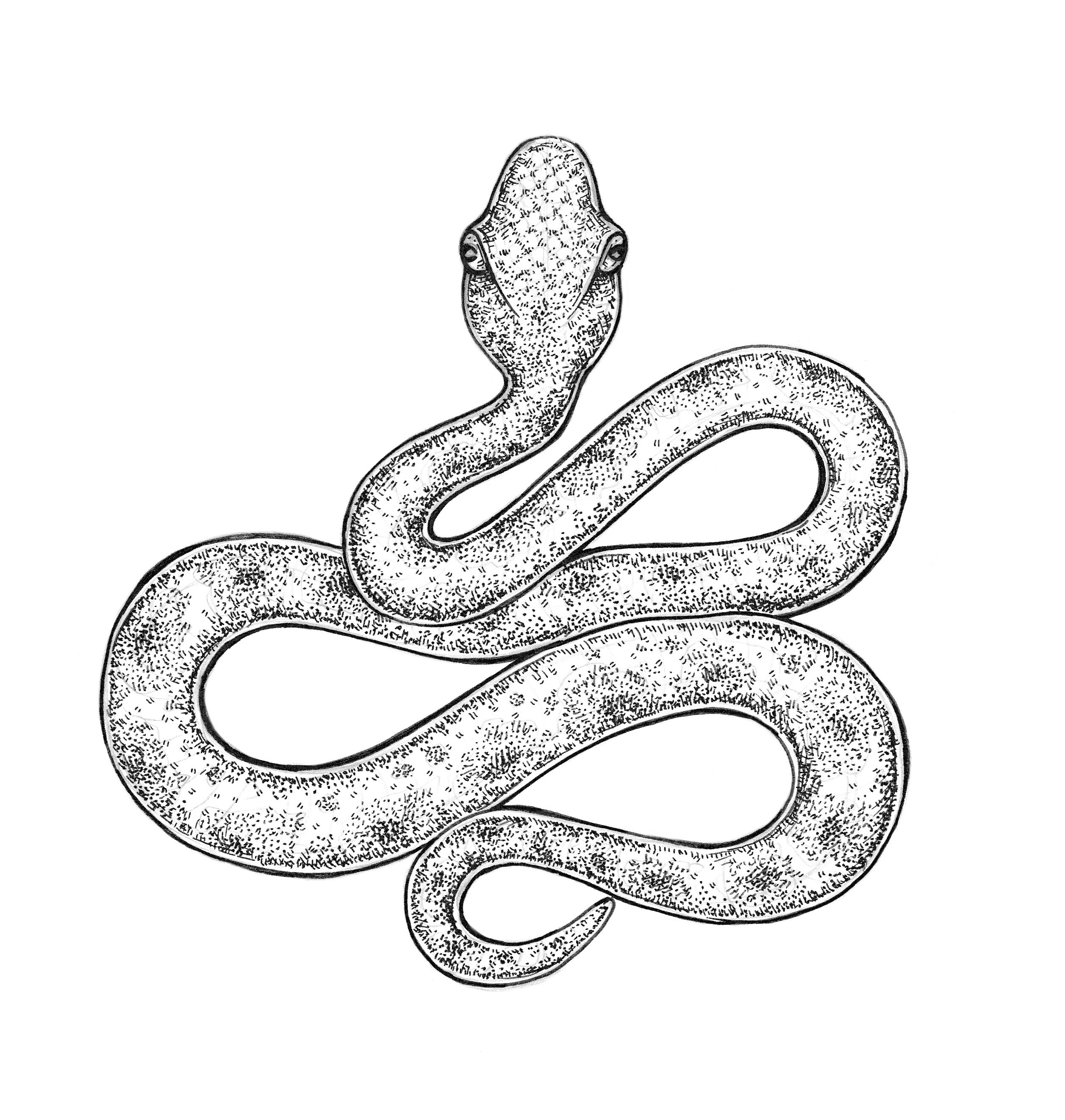 Mysterious Snake Coloring Picture Snake Drawing Snake Coloring Pages Drawings