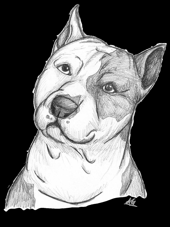Para My Perrito Draco Animal Drawings Sketches Animal Drawings Pitbull Drawing