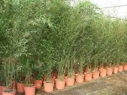 Resultado de imagen para plantas para maceteros de exterior