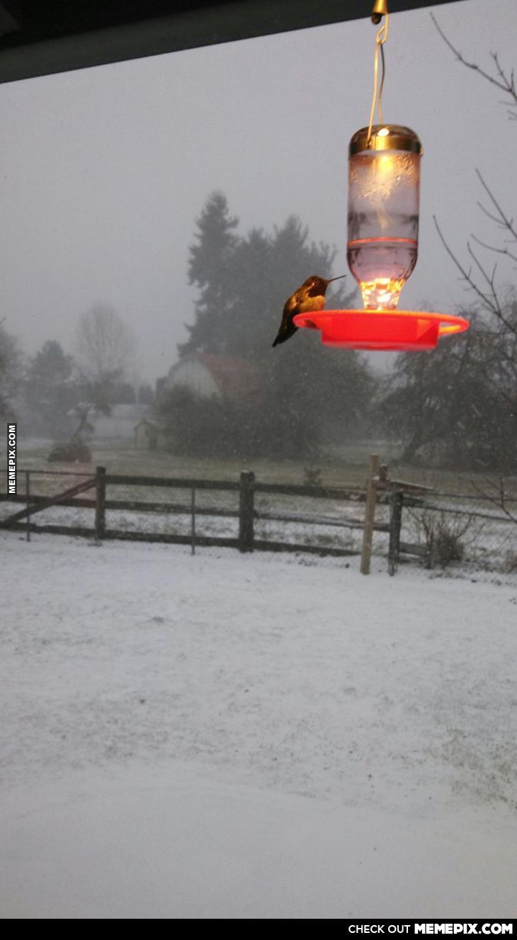 My Aunt Put A Heat Lamp On The Hummingbird Feeder To Keep The Hummers Well Fed This Winter
