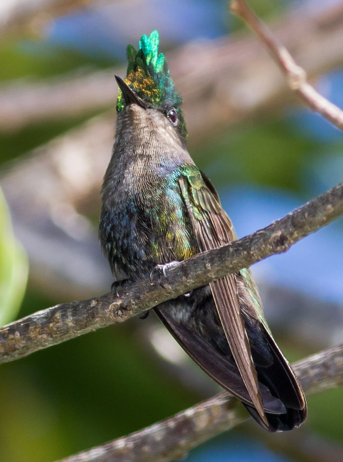 Celebran durante un mes el Festival de Aves Endémicas del Caribe | Mi Puerto Rico Verde
