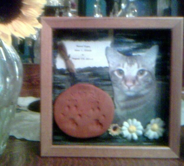 Cat Died Suddenly: Shadow Box Memorial To My Cat, Vajra, Who Died Suddenly On
