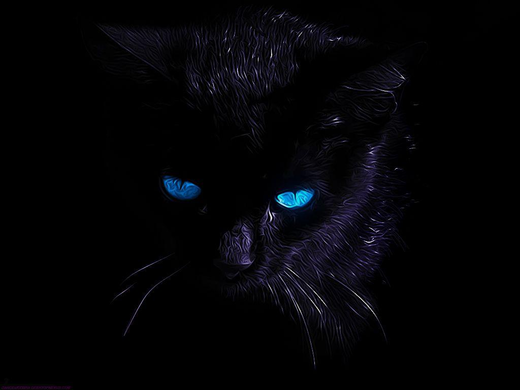Black Cat With Blue Eyes Koshachi Oboi Chernaya Koshka Koshki