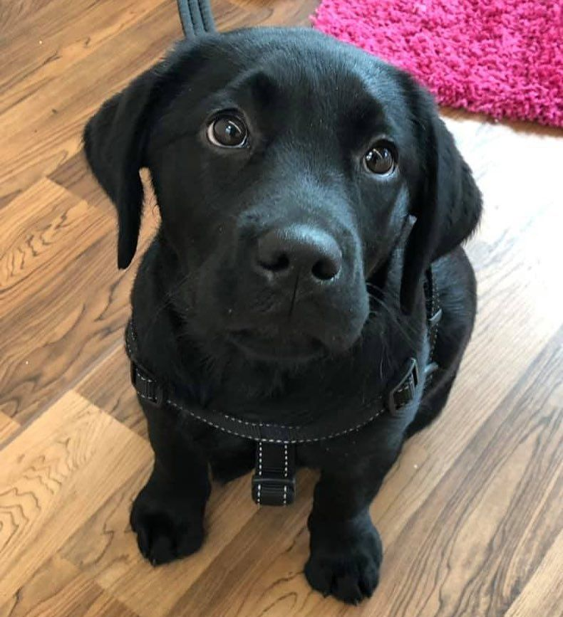 Hearing Dogs For Deaf People On Instagram She May Be Very New To