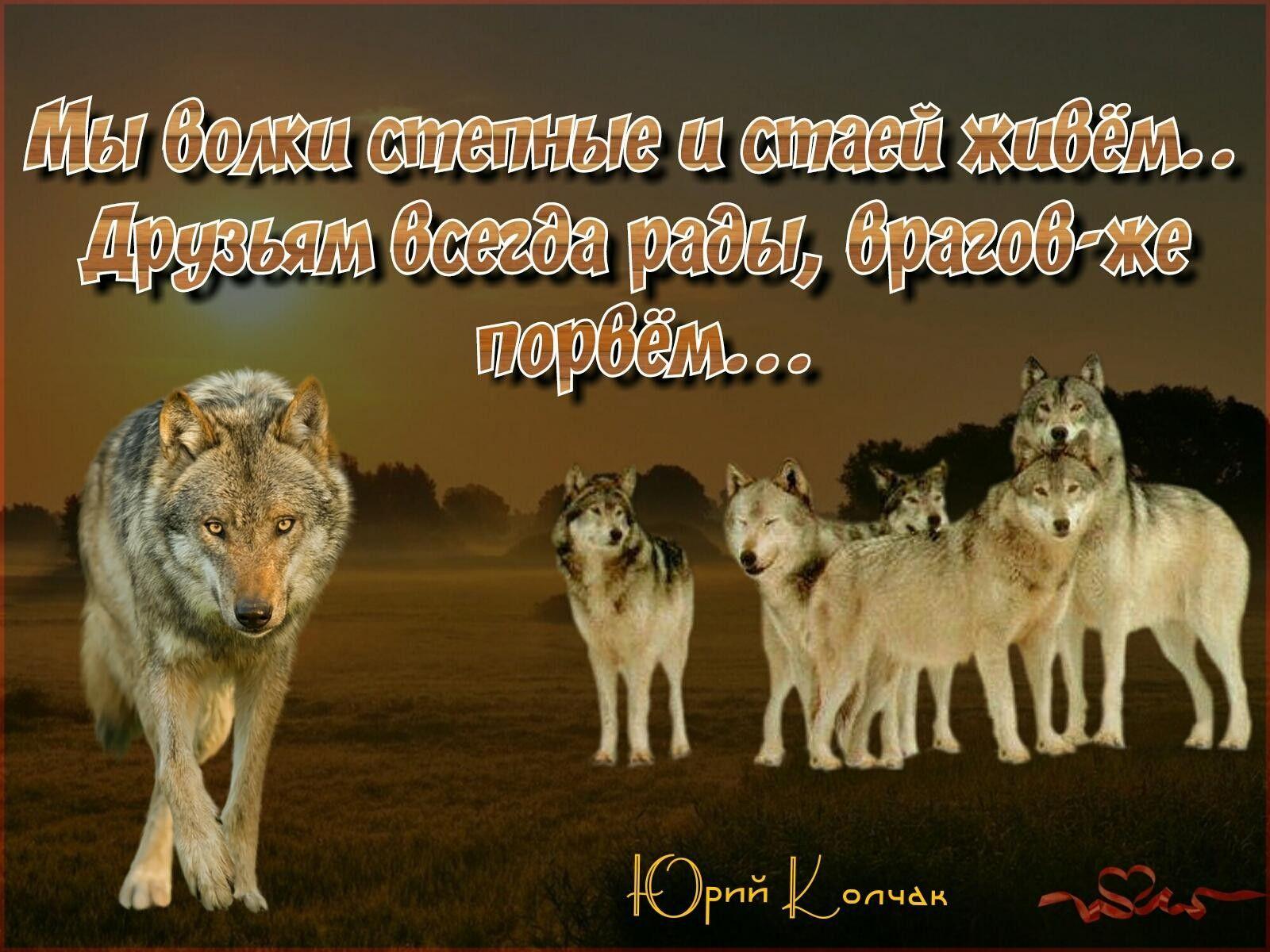 Statusy Pro Volkov Smeshnye Memy Memy Slova So Smyslom