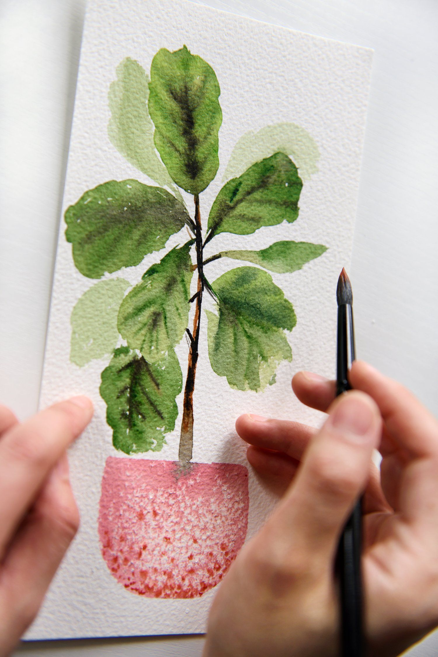 Watercolor Tutorial How To Paint A Cute Fiddle Leaf Fig Plant