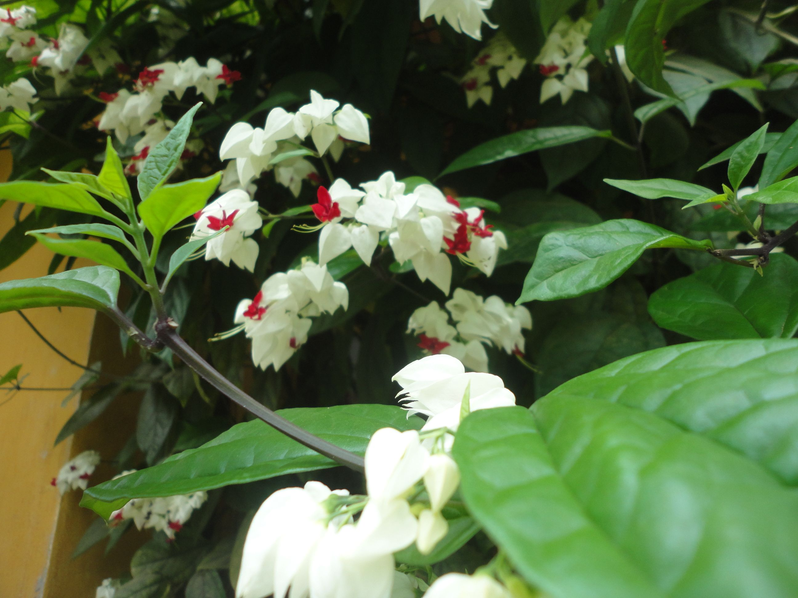 Es una planta que se extiende y se enreda con facilidad - Plantas de sol y sombra ...