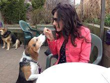 Dog Friendly Restaurants In Pittsburgh