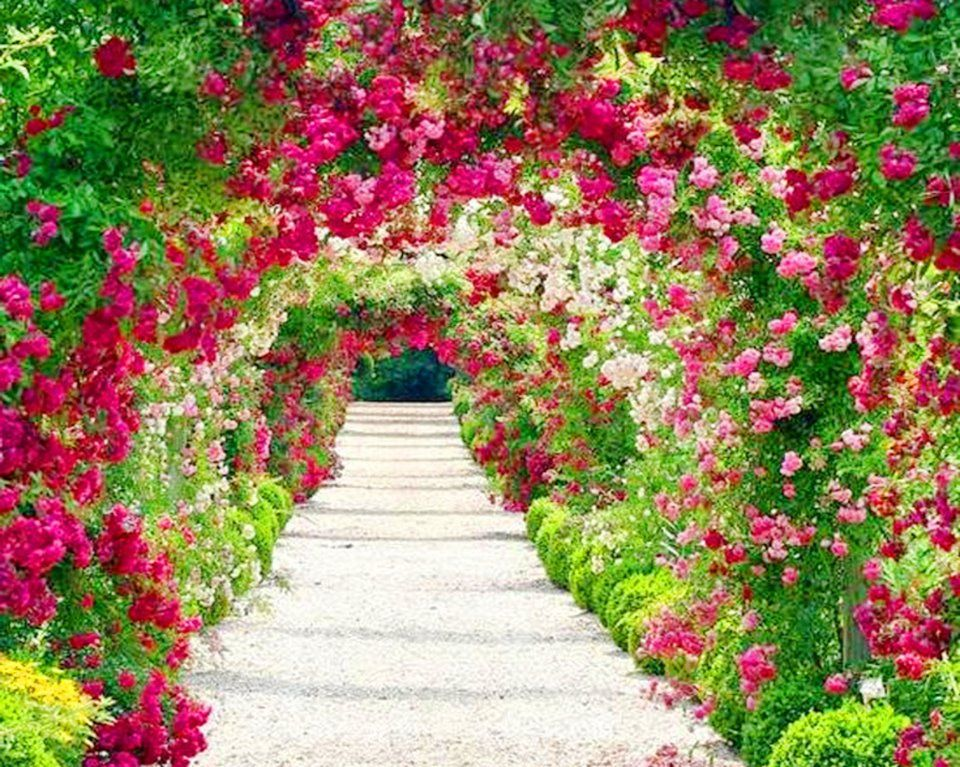 Fondos De Pantalla Hermosos De Flores: Flores Paisajes De Flores Tulipanes