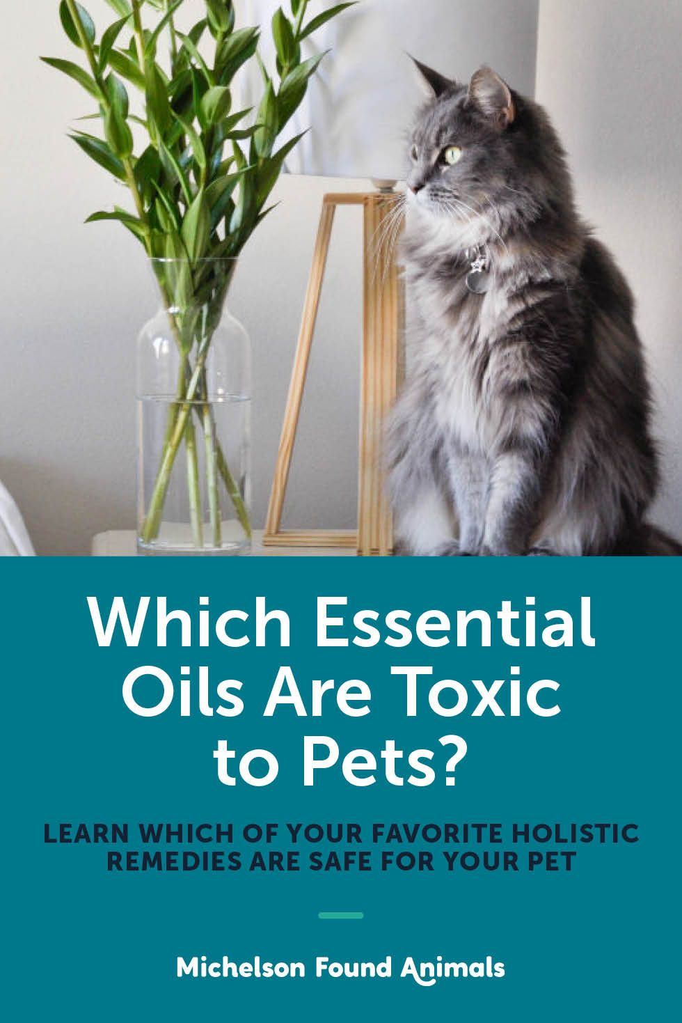 Which Essential Oils Are Toxic to Pets? Essential oils