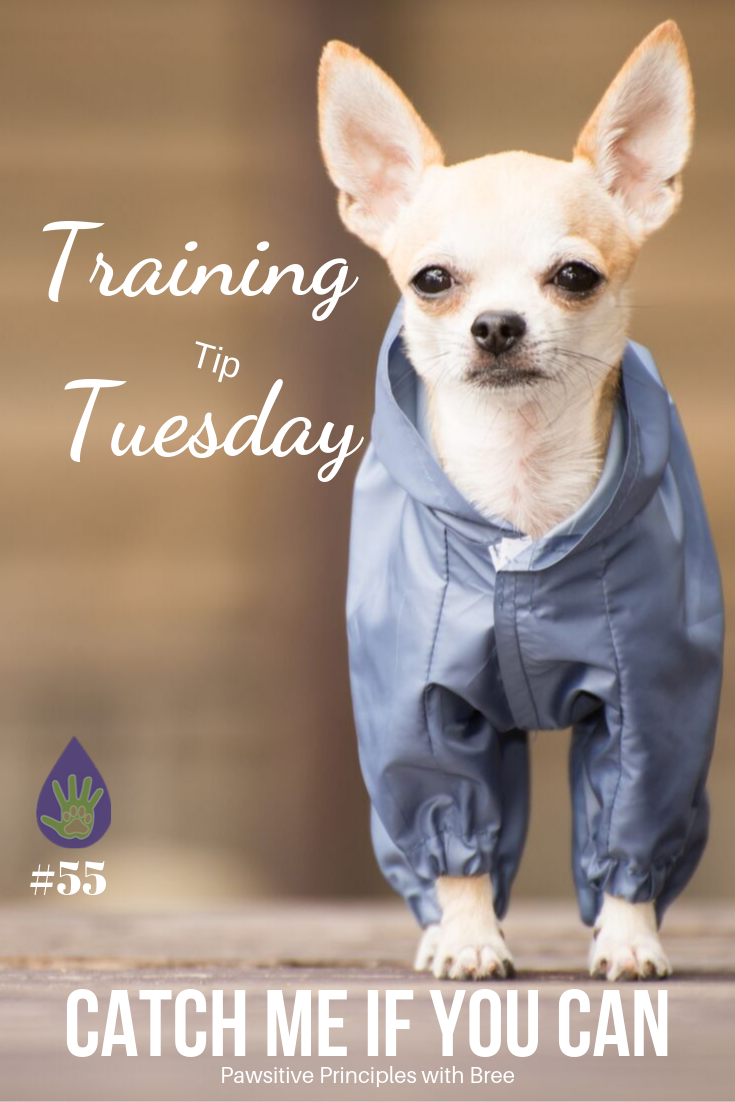 How To Pick Up A Little Dog Dog Training Little Dogs Dogs