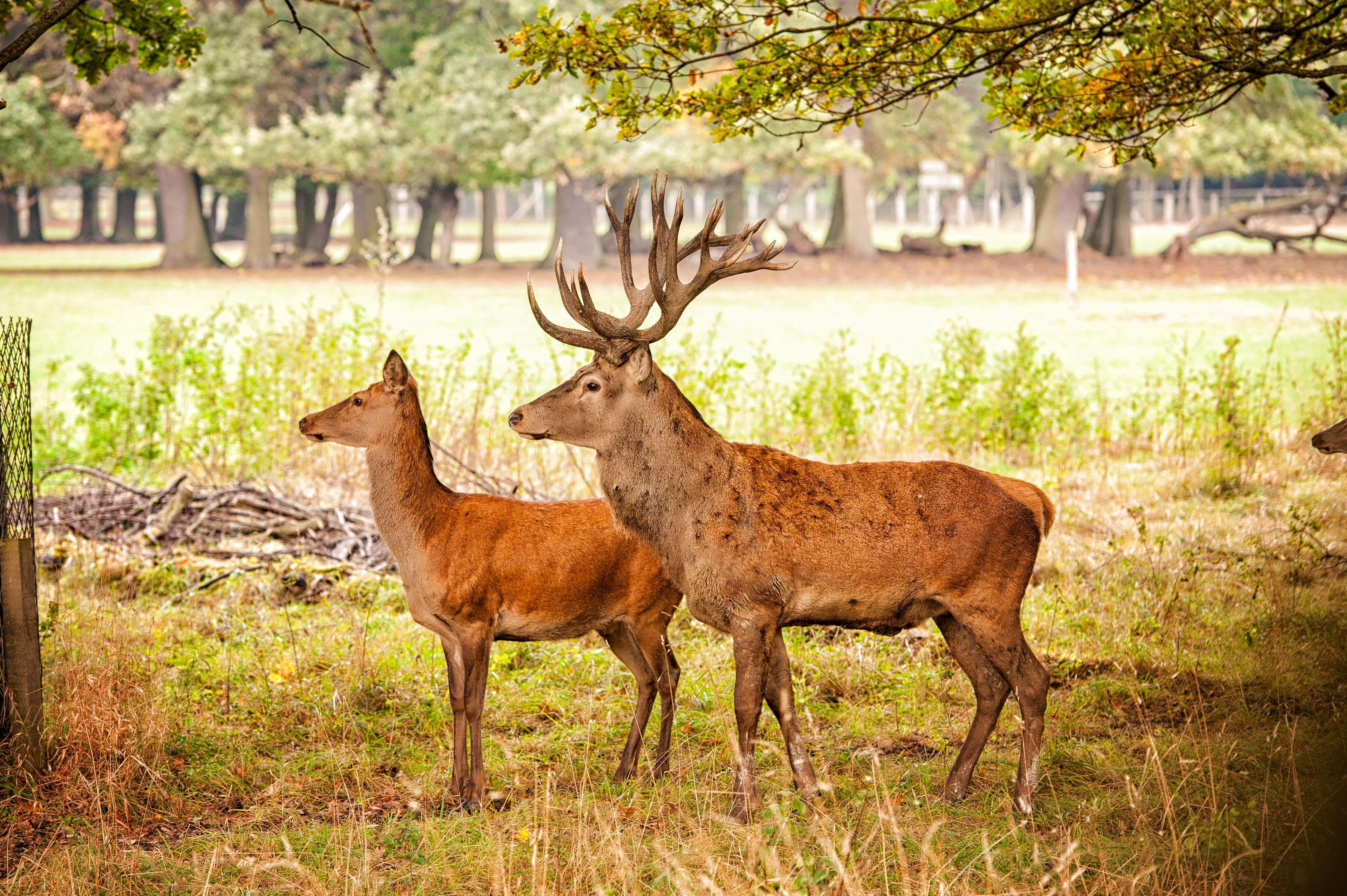 #animal #animal park #deer #roe deer