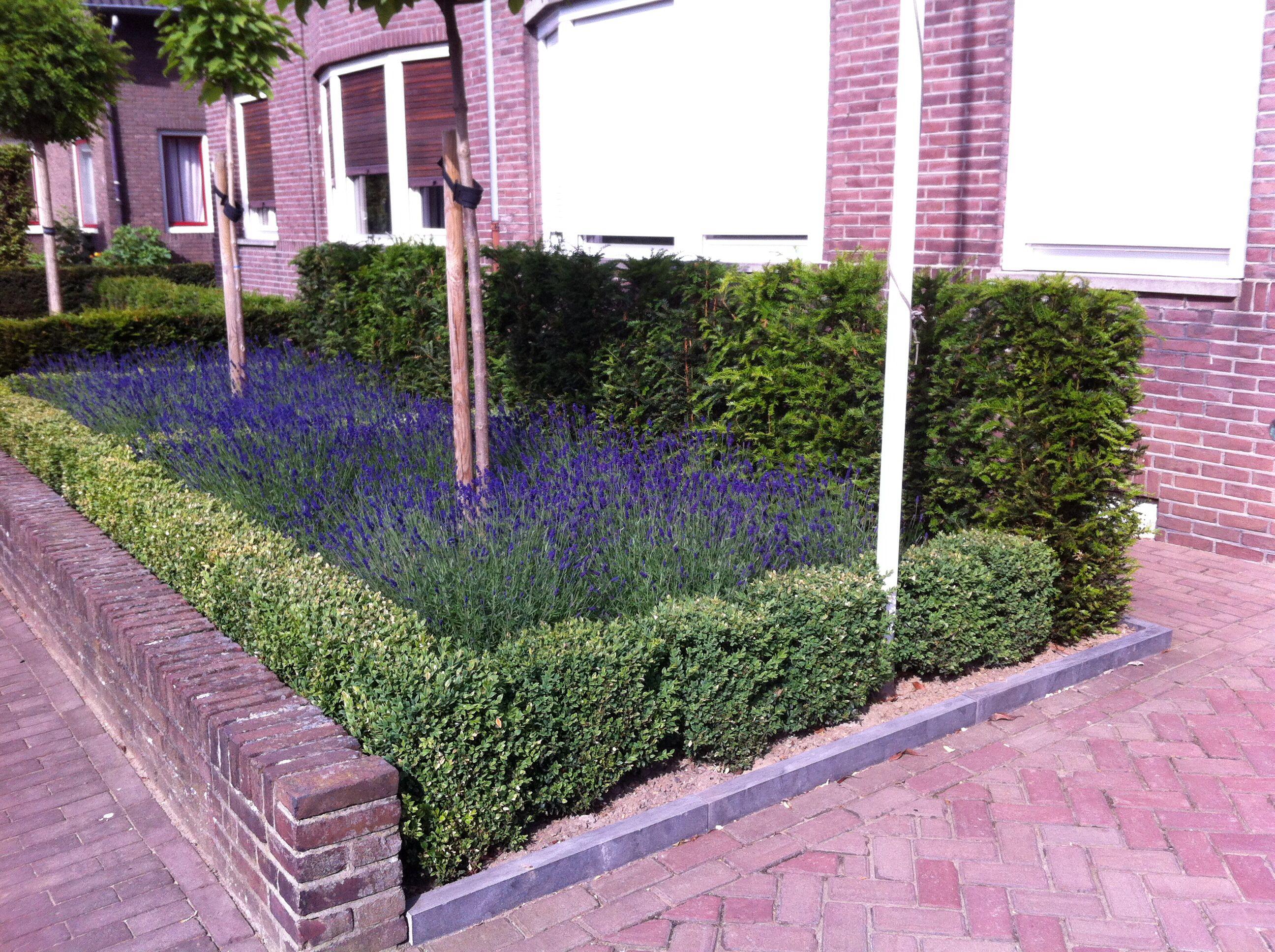 Vorgarten outdoor pinterest gartenhecken g rten und for Minimalistischer vorgarten