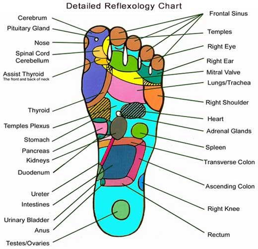Sexual reflexology chart for feet