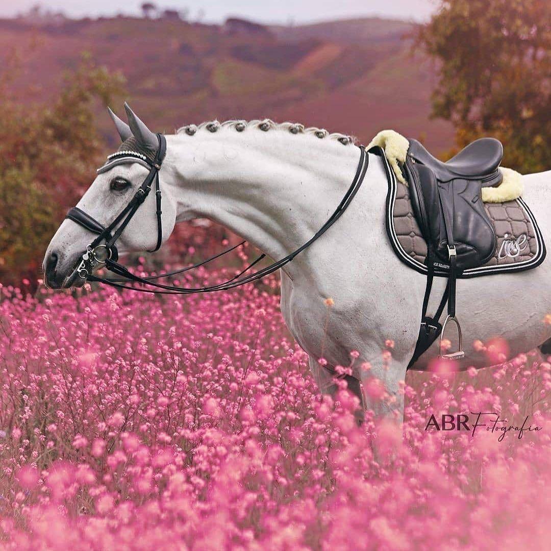 اللهم اننا نسألك رضاك و حصان و مكان مثل هذا Follow Us Stud386 Like The Post Horses Beautiful Horses Dressage Horses
