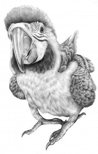 Desenho De Uma Arara Realista Pesquisa Google Desenhos De Animais Realistas Desenho De Aves Desenho De Arara