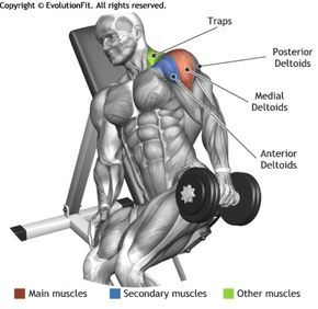 Shoulders One Arm Incline Bench Lateral Raise Fitness And
