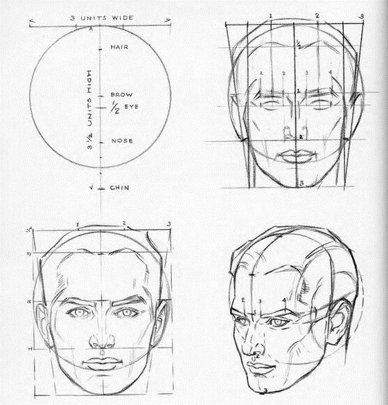 Proportions Of The Head Tutorials By Andrew Loomis Andrew