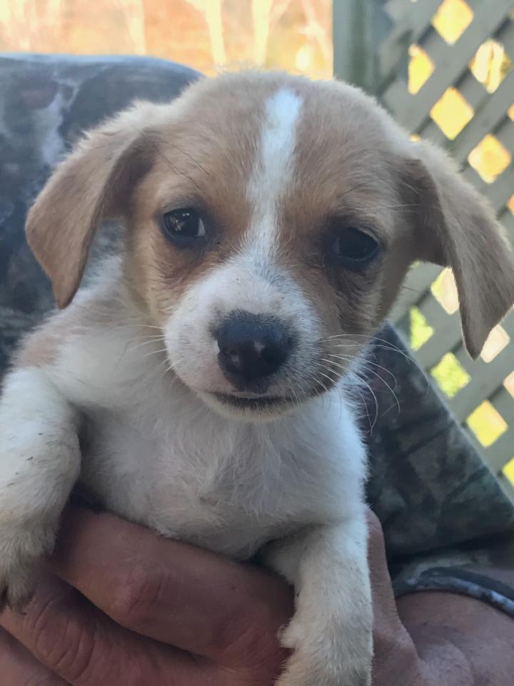Adopt Allee On Petfinder Help Homeless Pets Dog Adoption Adoption