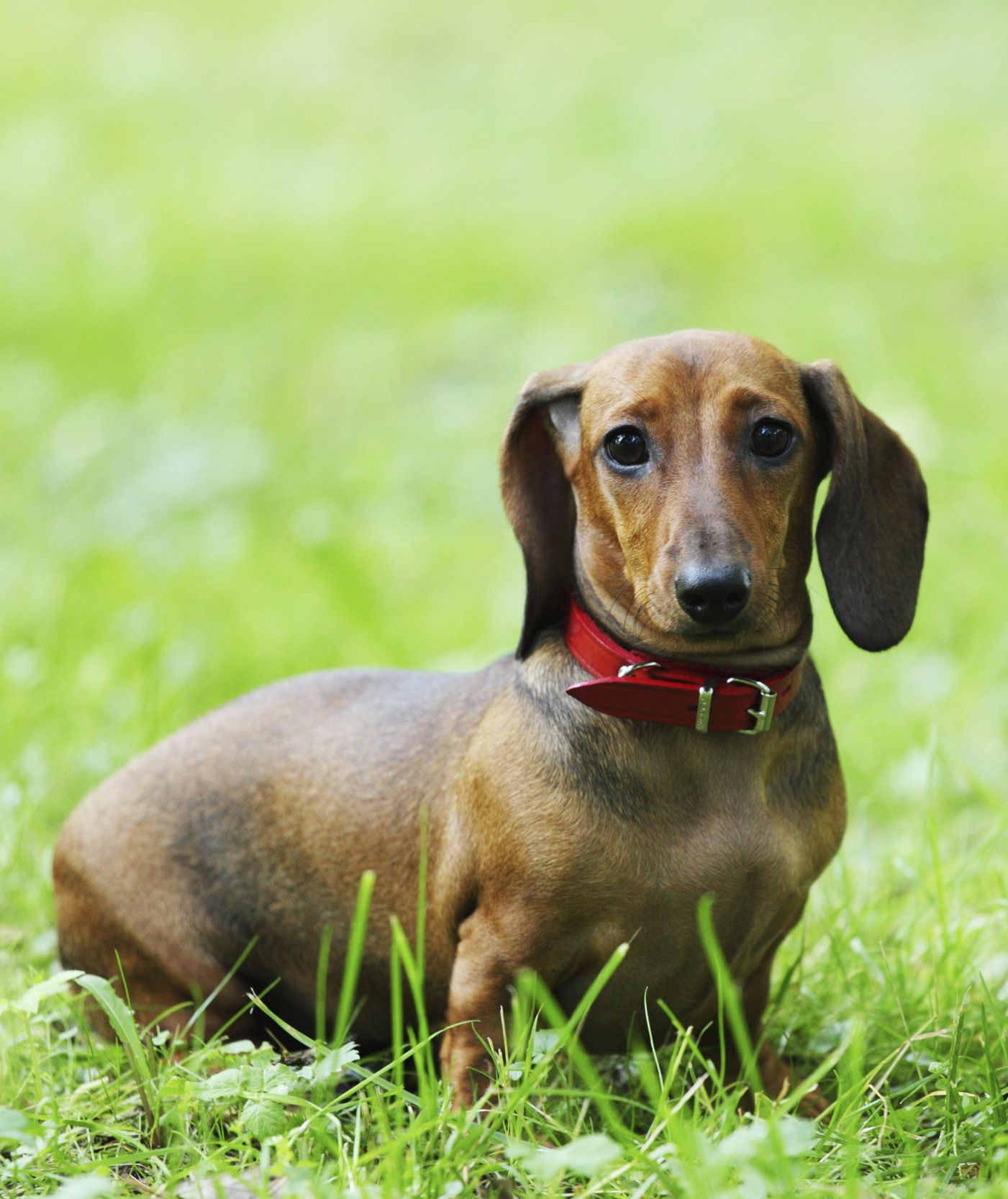 10 Dog Breeds Commonly Found In Animal Shelters Dog Breeds Dogs
