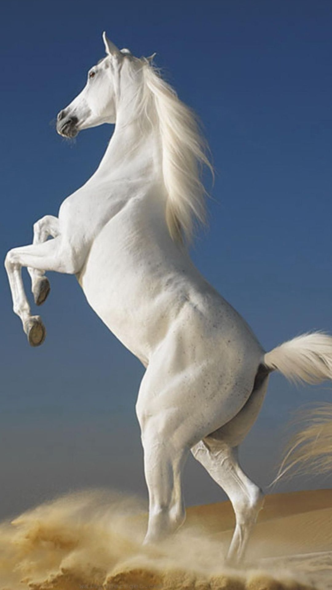 TAP AND GET THE FREE APP! Animals White Horse Blue Sand