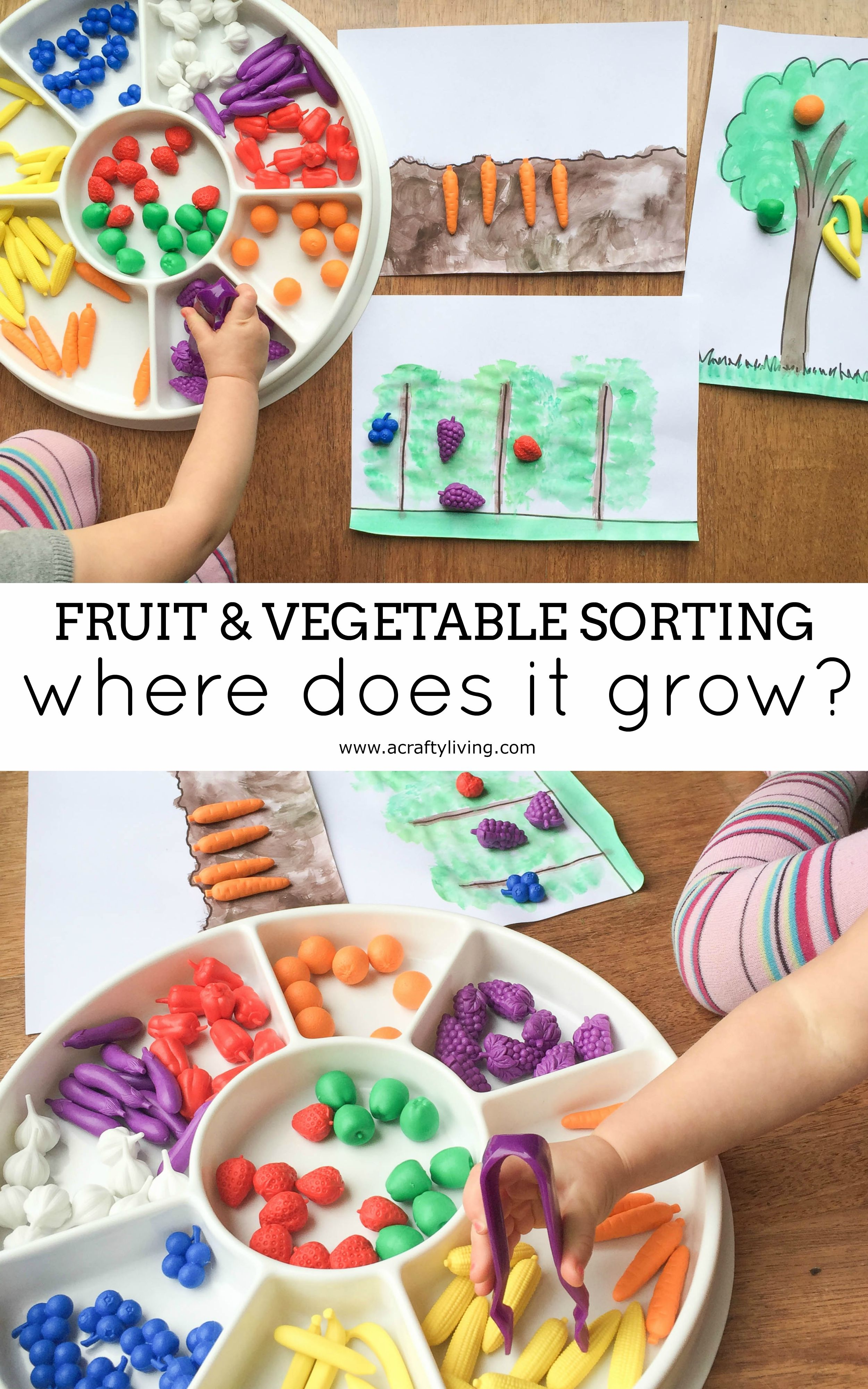 Nutritional Fun Learning Where Food Grows With Fruit