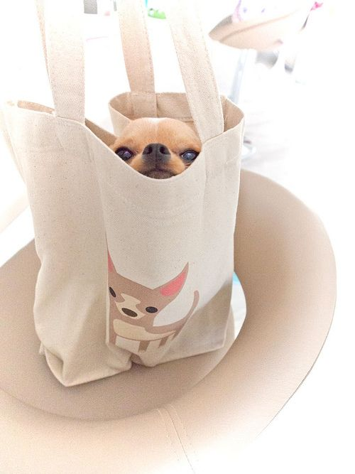 Chi in a Chi bag. This makes me smile! : )))))