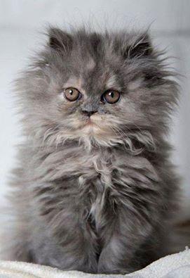 Wow lots of fur...