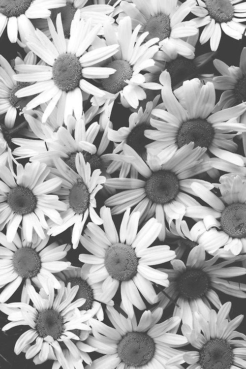 Daisy3 Via Tumblr Fotografia Mundo En Blanco Y Negro