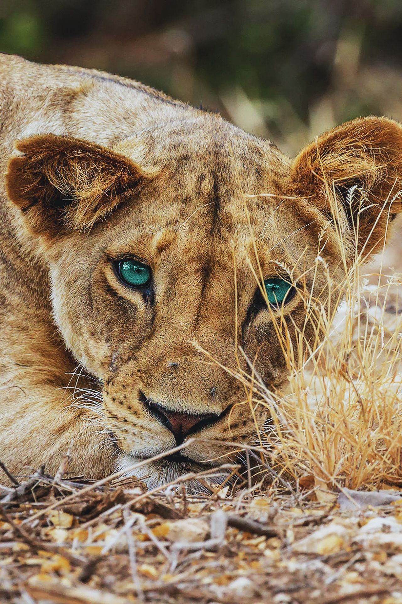 Pin Von Anaclaragomez Auf Fondos Tiere Raubkatzen Katzen