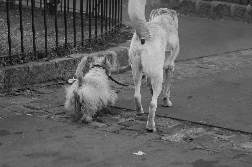 el mejor amigo del perro es otro perro