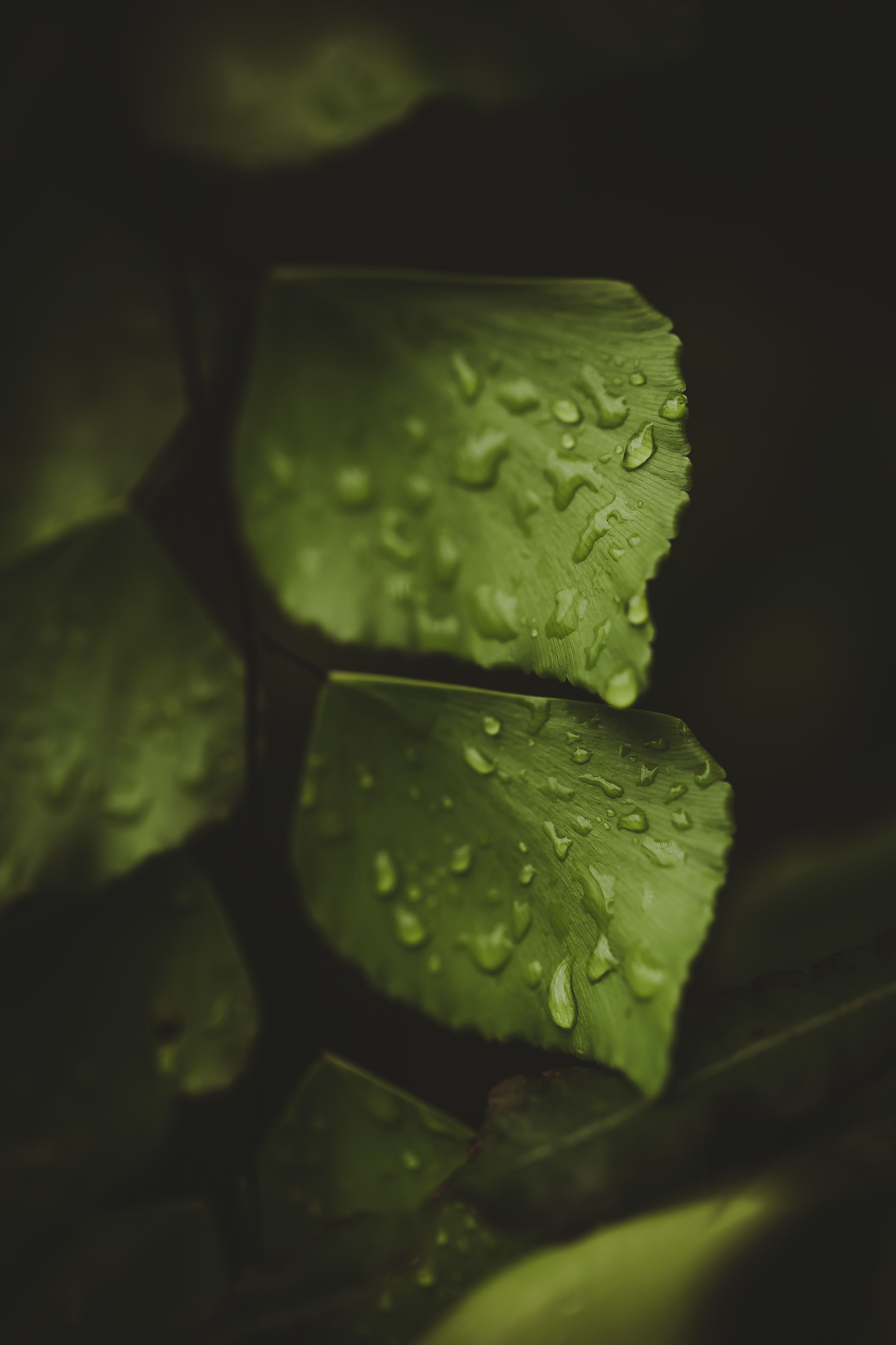 Wet Green Leaves Macro Photography Photography Prints Available