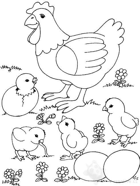 Rooster Coloring Pages Mother Hen Rooster And Cute Chicks