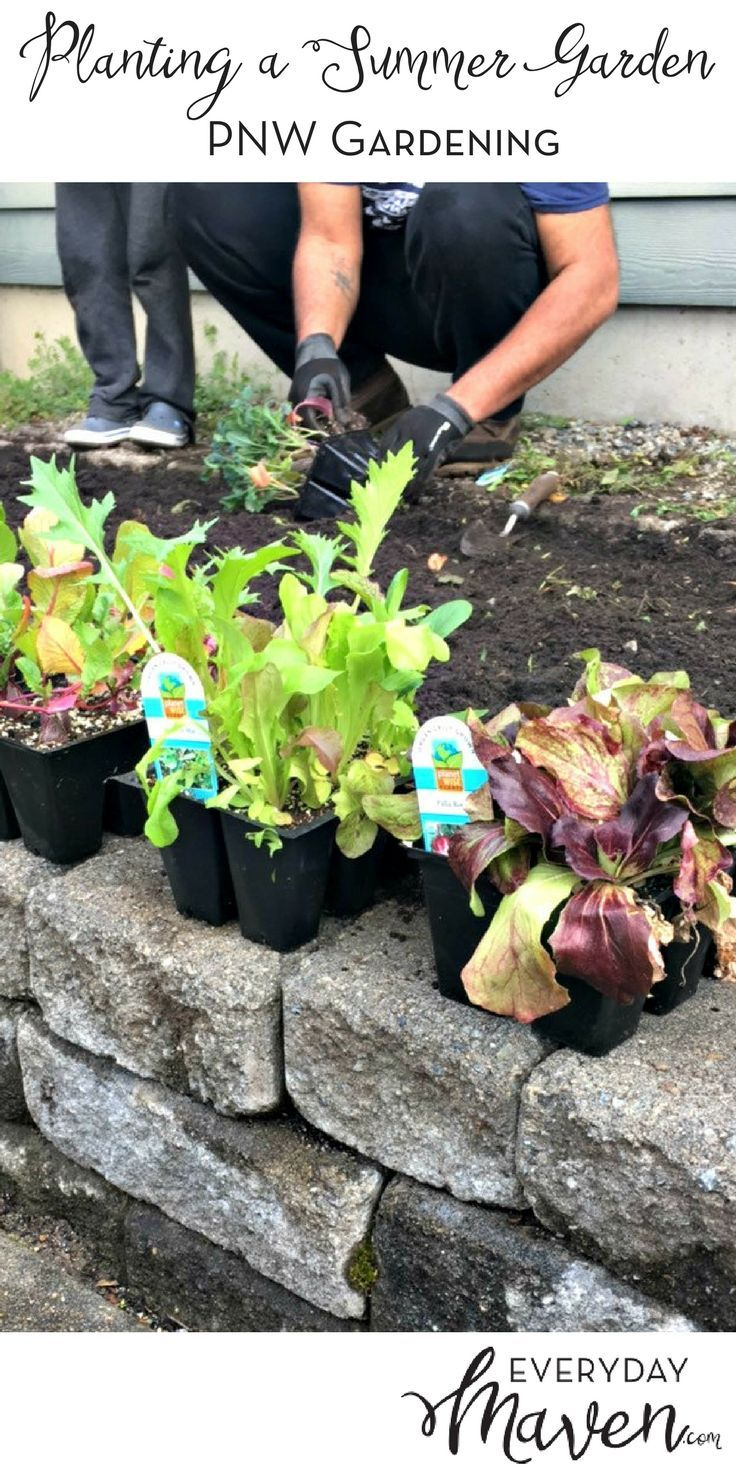 Tips For Planting An Organic Pnw Vegetable Garden Done In