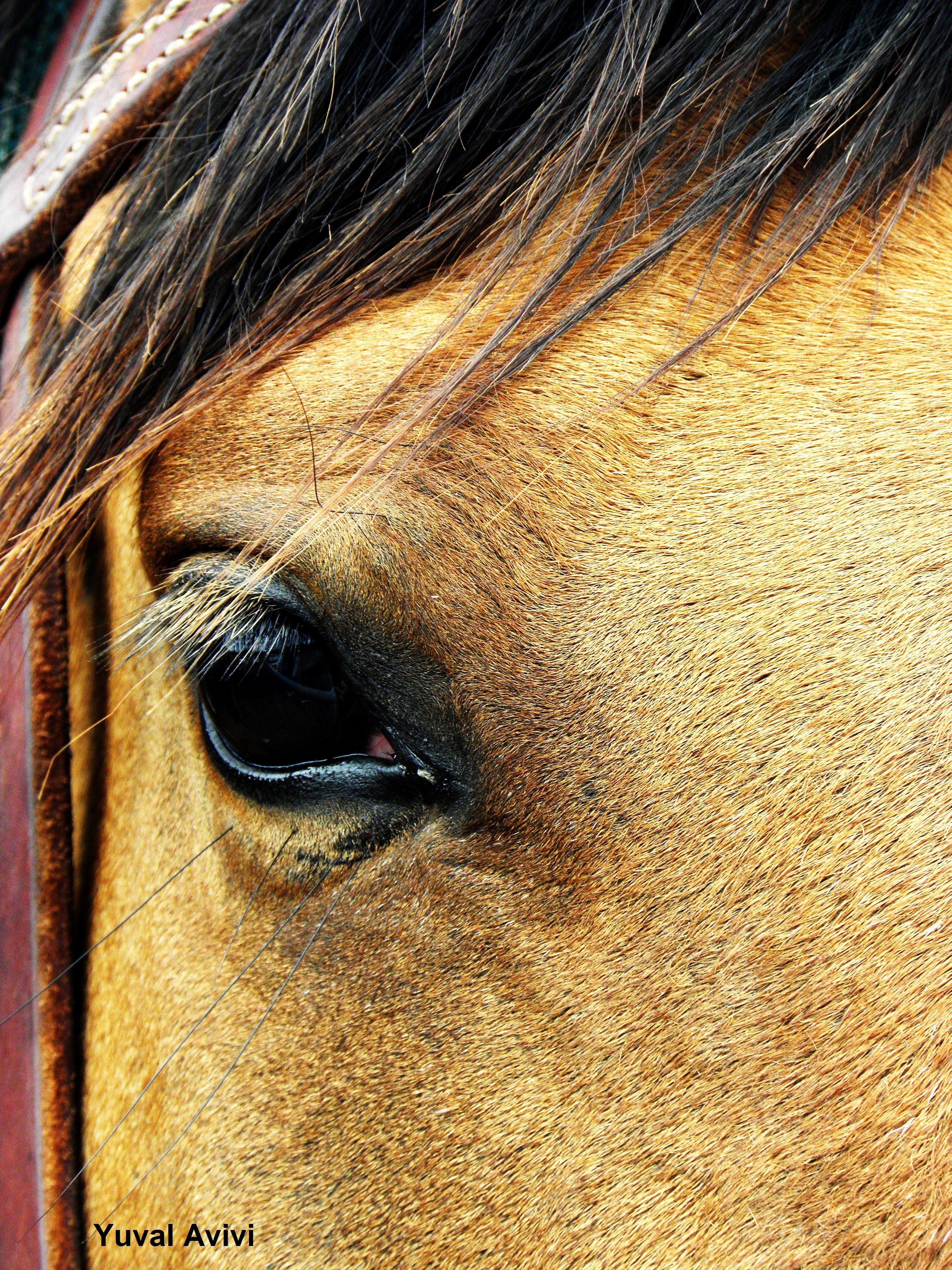 #Horse...eyes into our soul Eye of the Horses #HorseHealth #HorseColic www.loveyour.horse