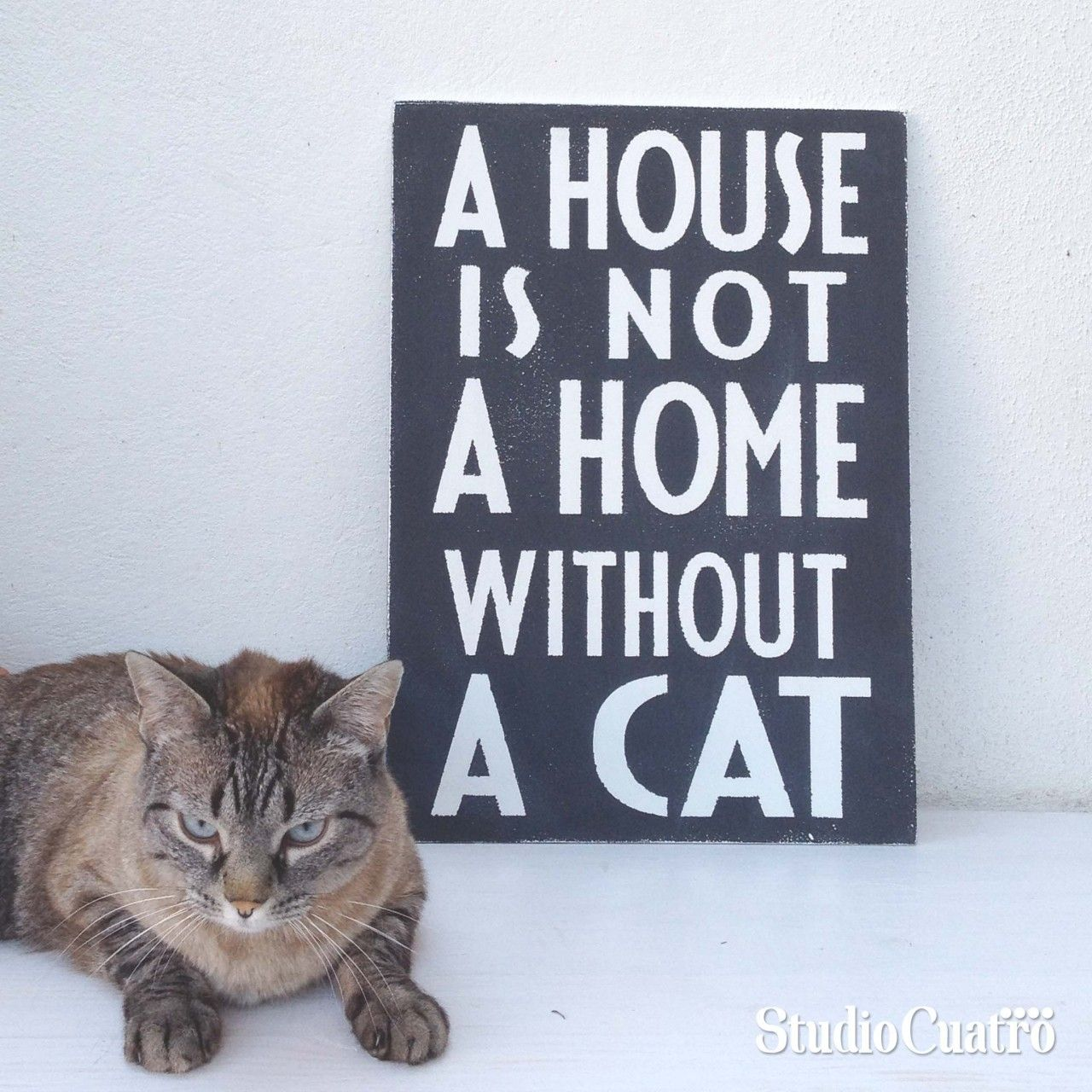 A House Is Not A Home Without A Cat Cats Gorgeous Cats Most
