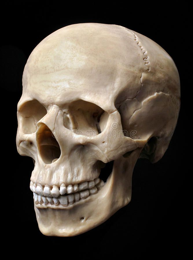 Human Skull Model. Anatomically correct medical model of the human skull , #Sponsored, #Model, #Anatomically, #Human, #Skull, #correct #ad