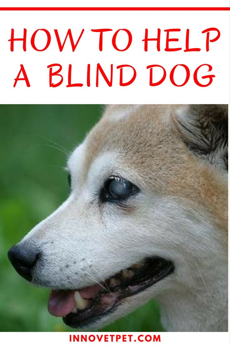 How to help a blind dog dog agility training and pet care