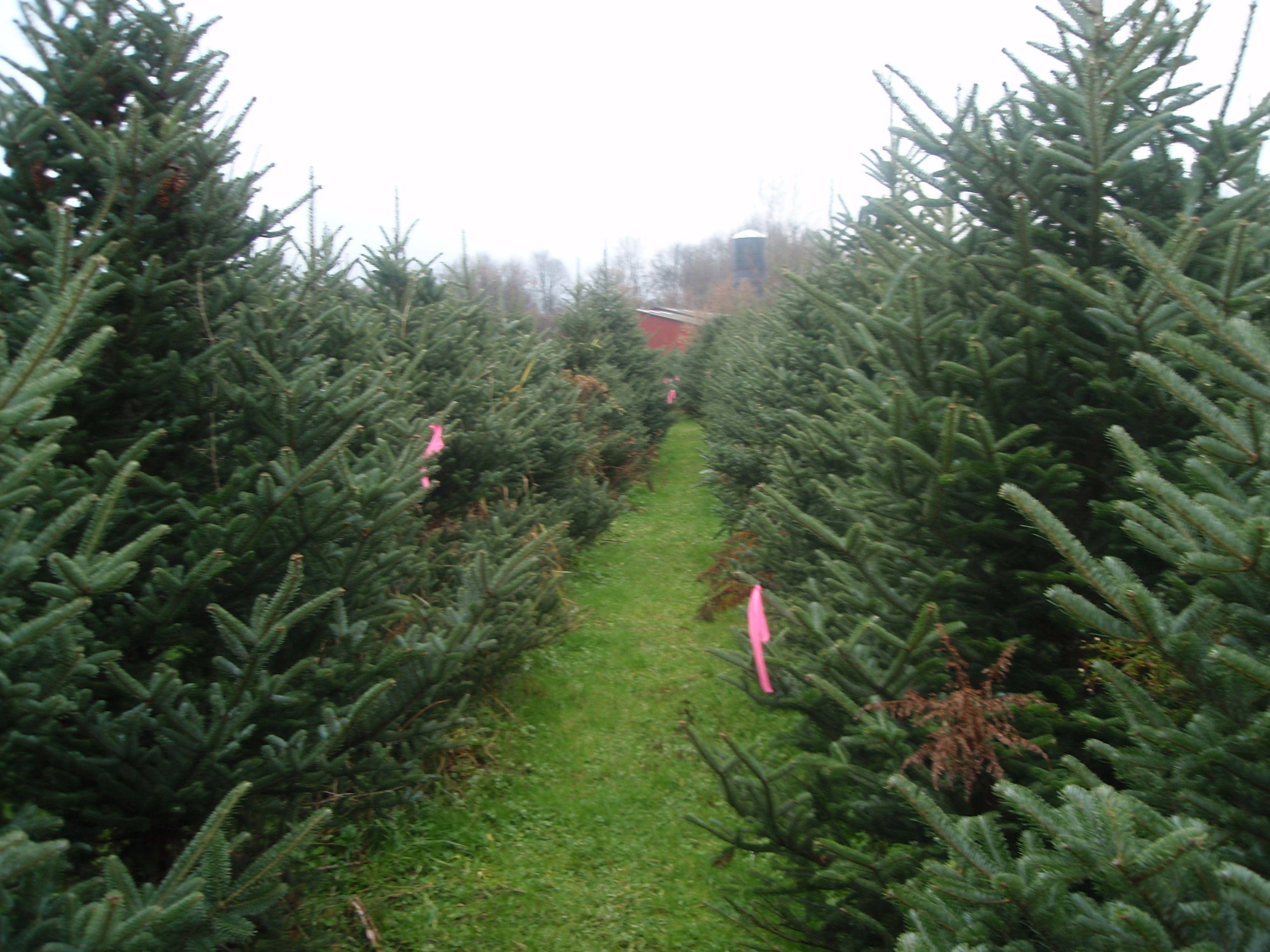 Greenwood Christmas Tree Farm | Christmas tree farm, Tree ...