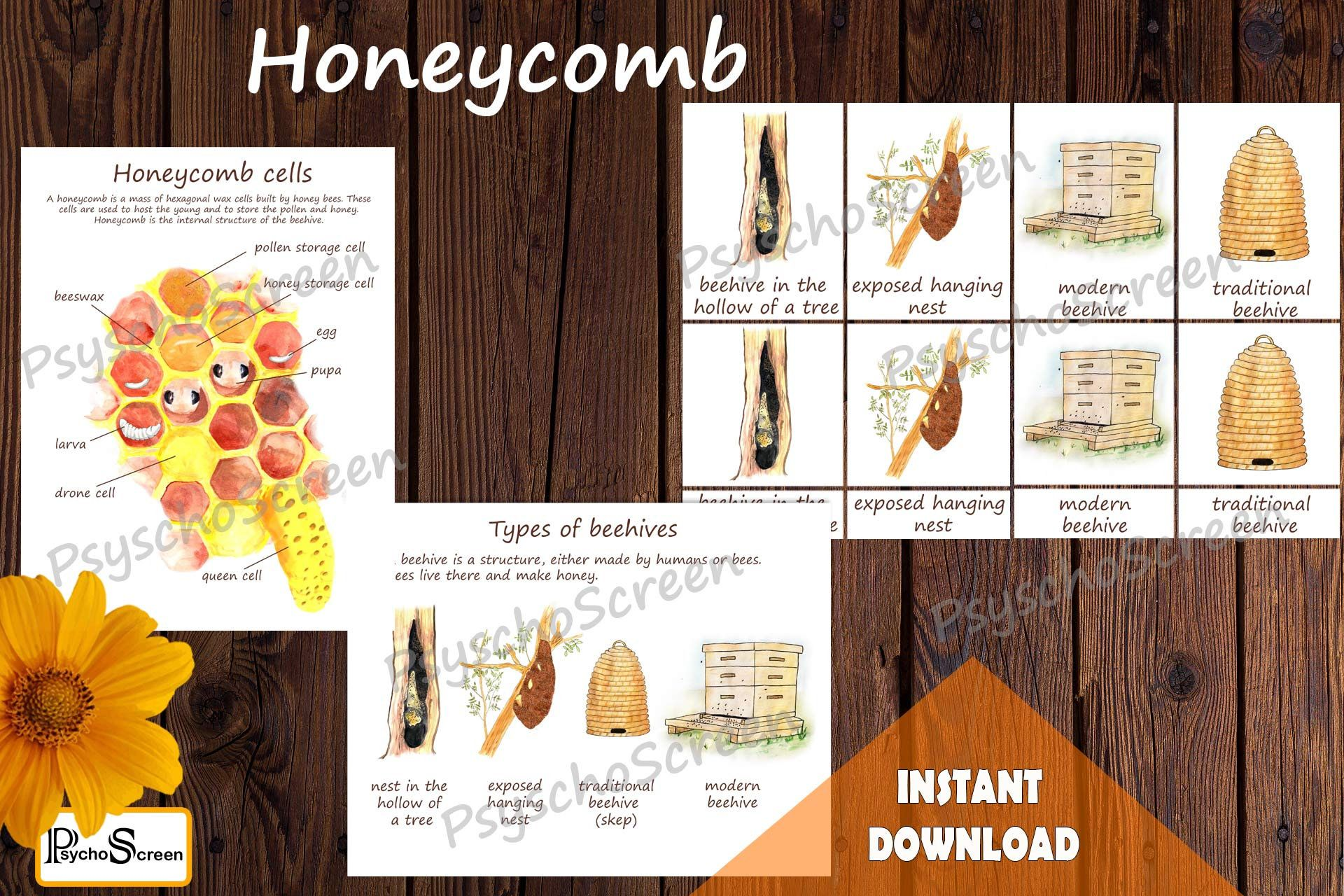 Honey Bee Unit Study Mega Printable Bees Bundle Anatomy