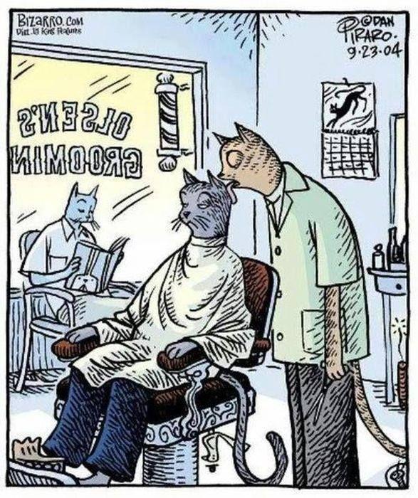 cat stylists