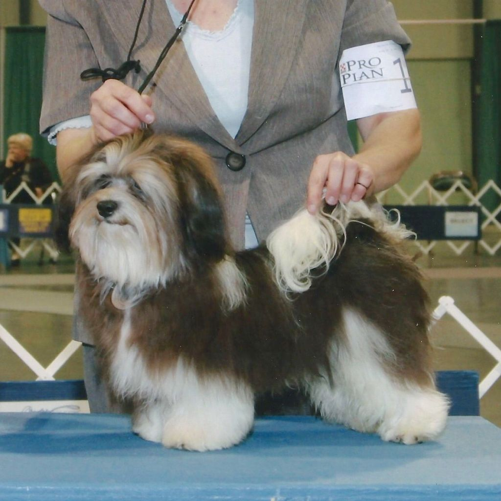 Pin by Carol Berry on Dogs Havanese puppies for sale